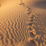 SITE_desert_marocain_2_c_Photo_Arnaud_RIOU.jpg