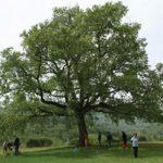 arbre-mosaique-droite-2.jpg